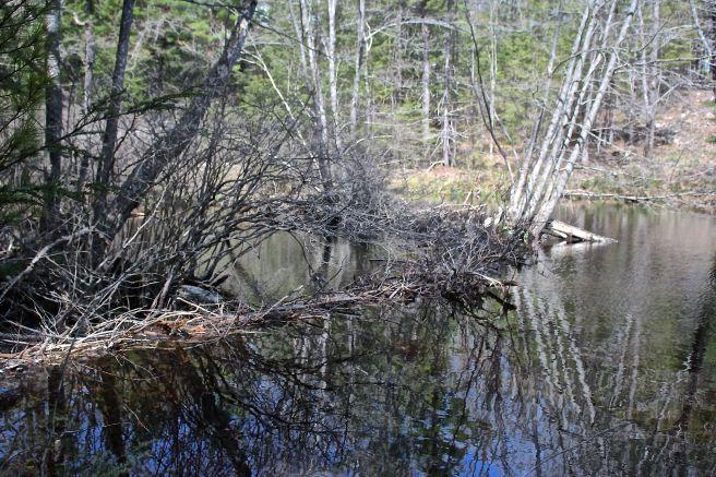 h-view beaver 2