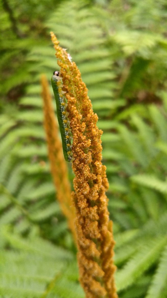 b-caterpillar 1