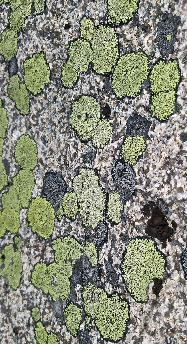 b-ph lichens1
