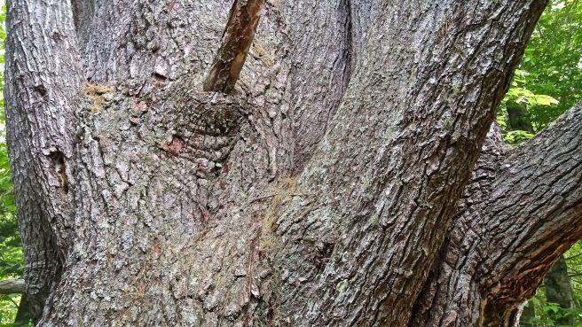 b-pine 3