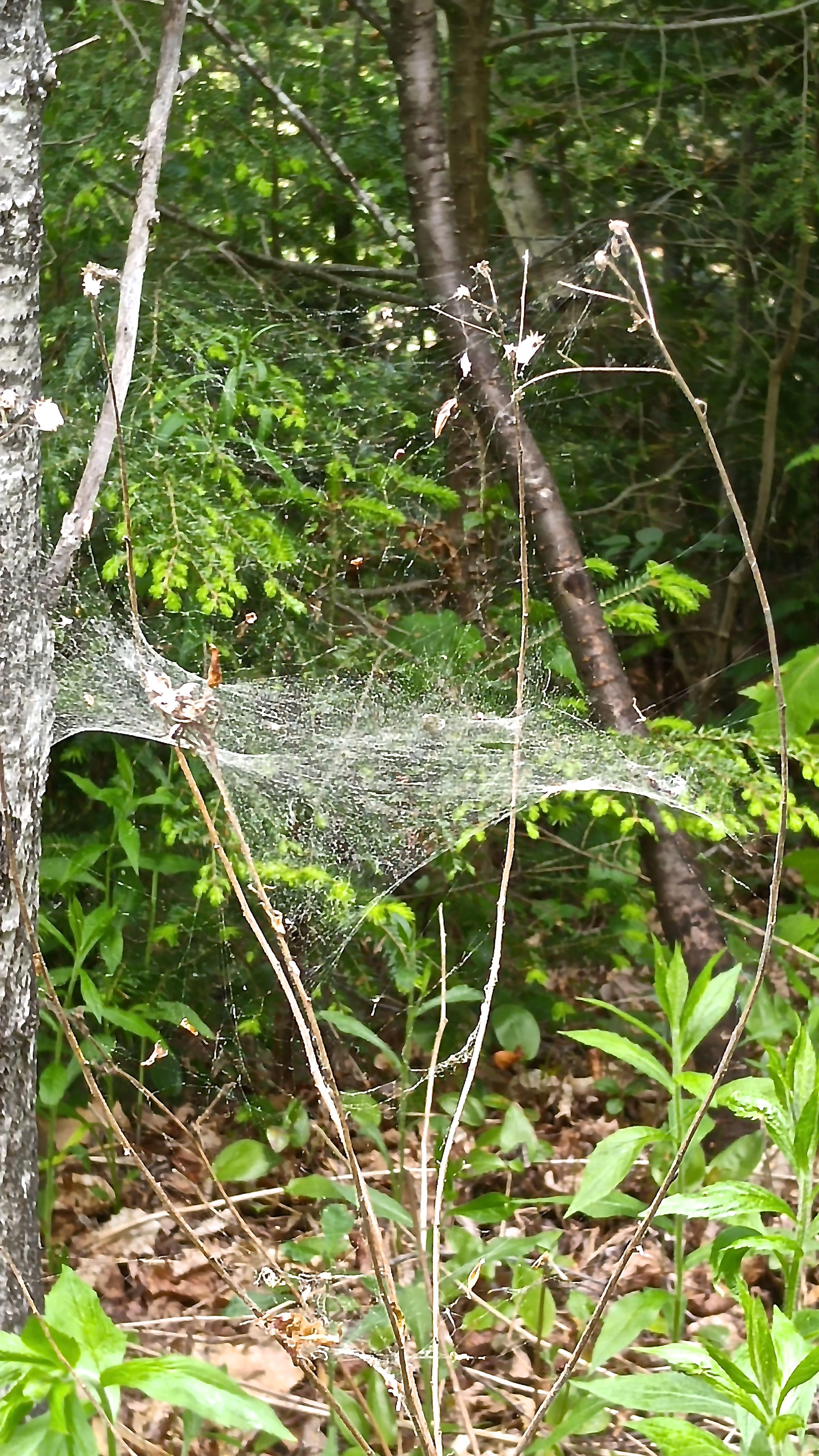 b-spider web