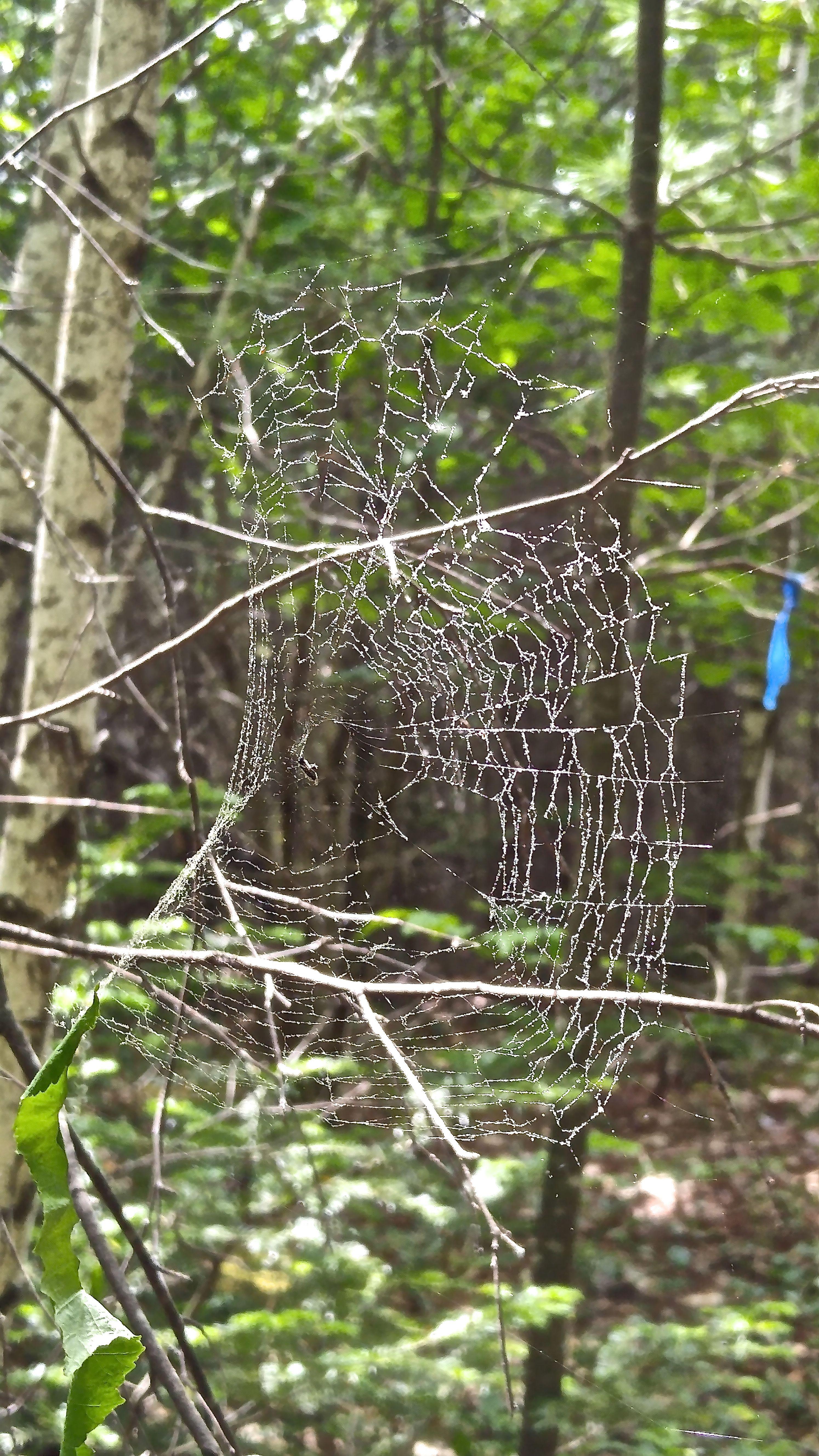 b-web 3
