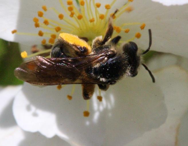 bee on multi