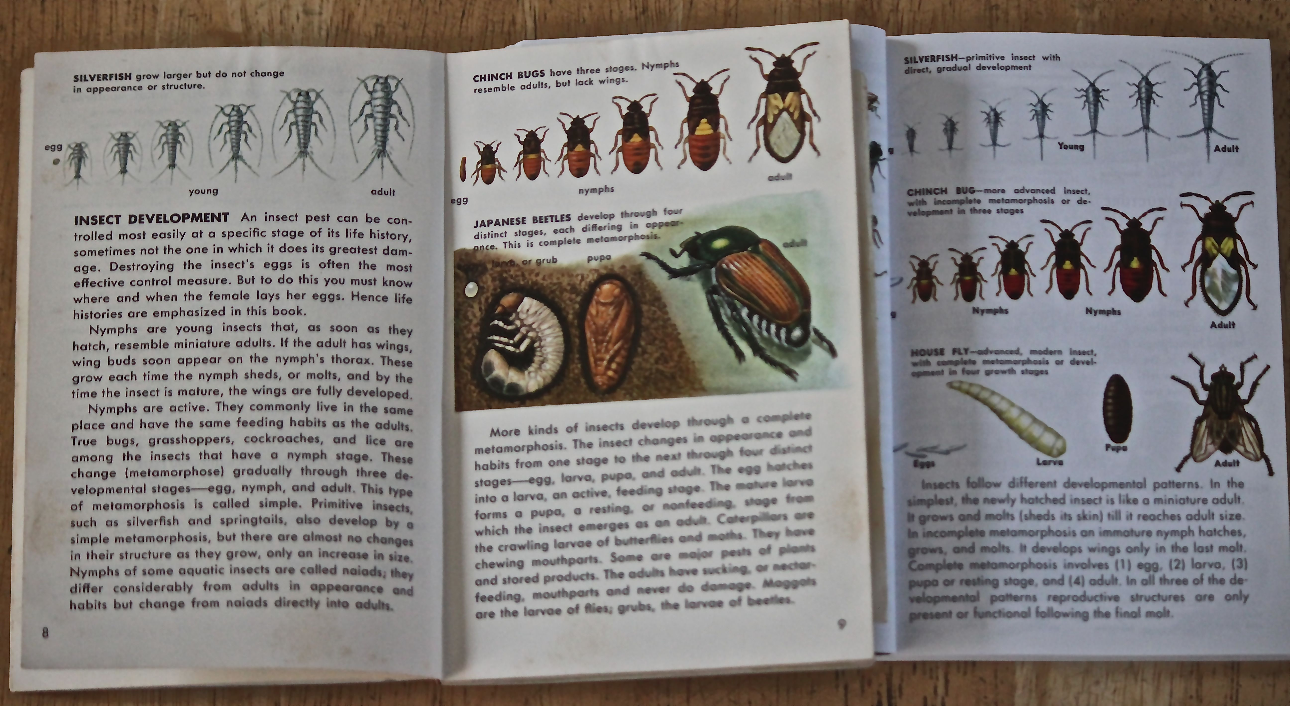 Insects Golden Guide Book