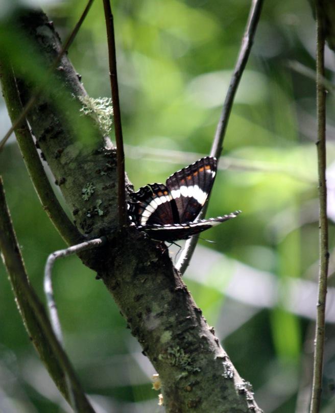 j-butterfly1
