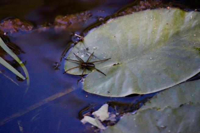 j-spider 2