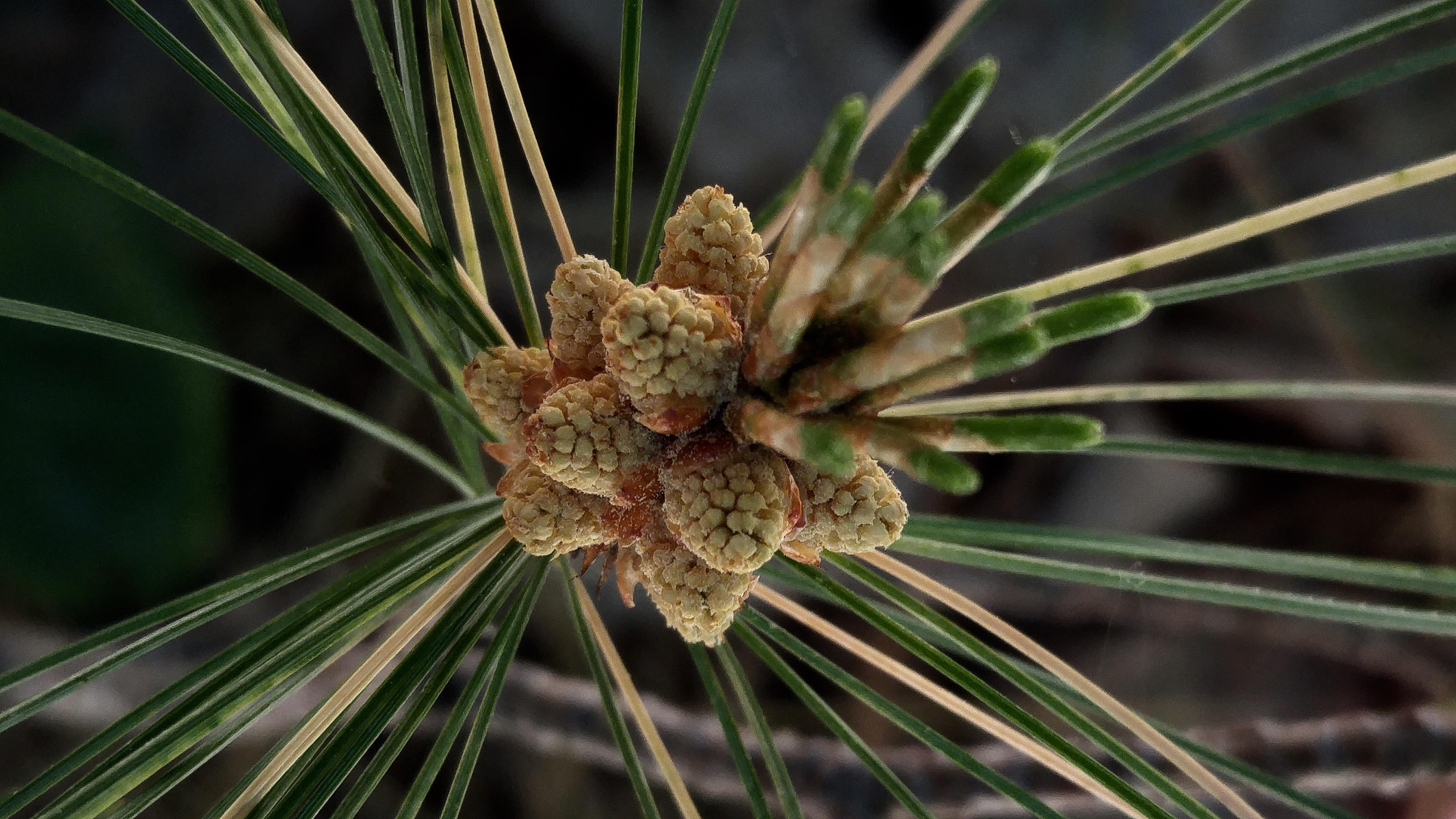 y-pollen 11 (1)