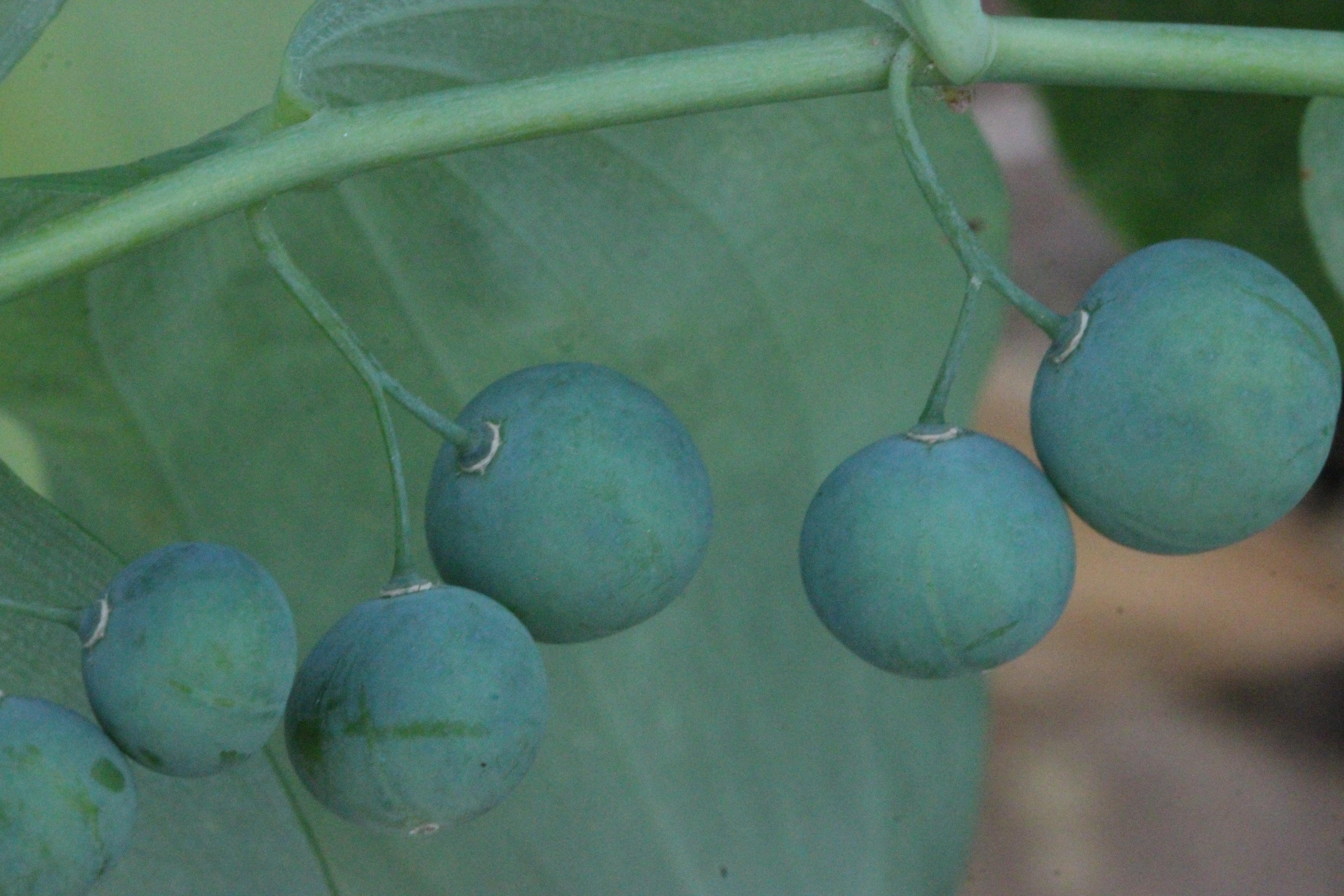 h berries 2