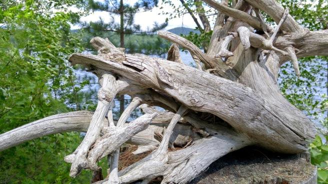 h-driftwood (1)