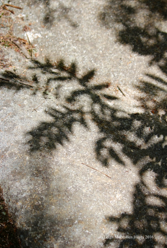 c-fern shadows