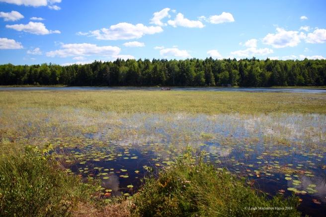 h-canoe on pond