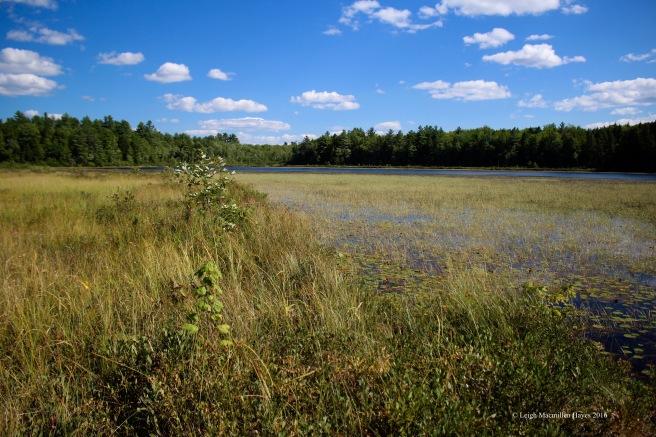 h-holt pond left