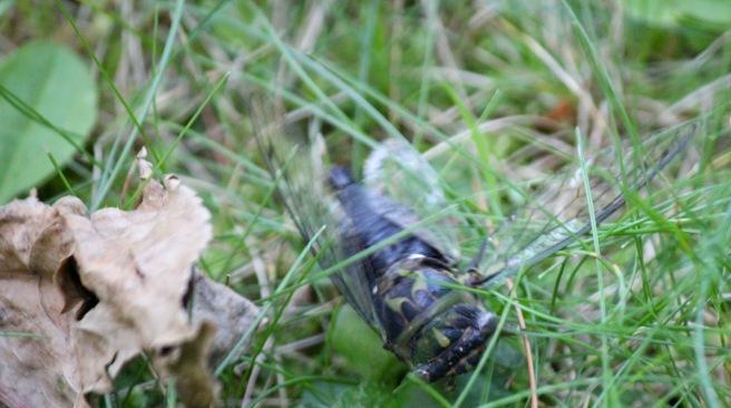 m cicada flap