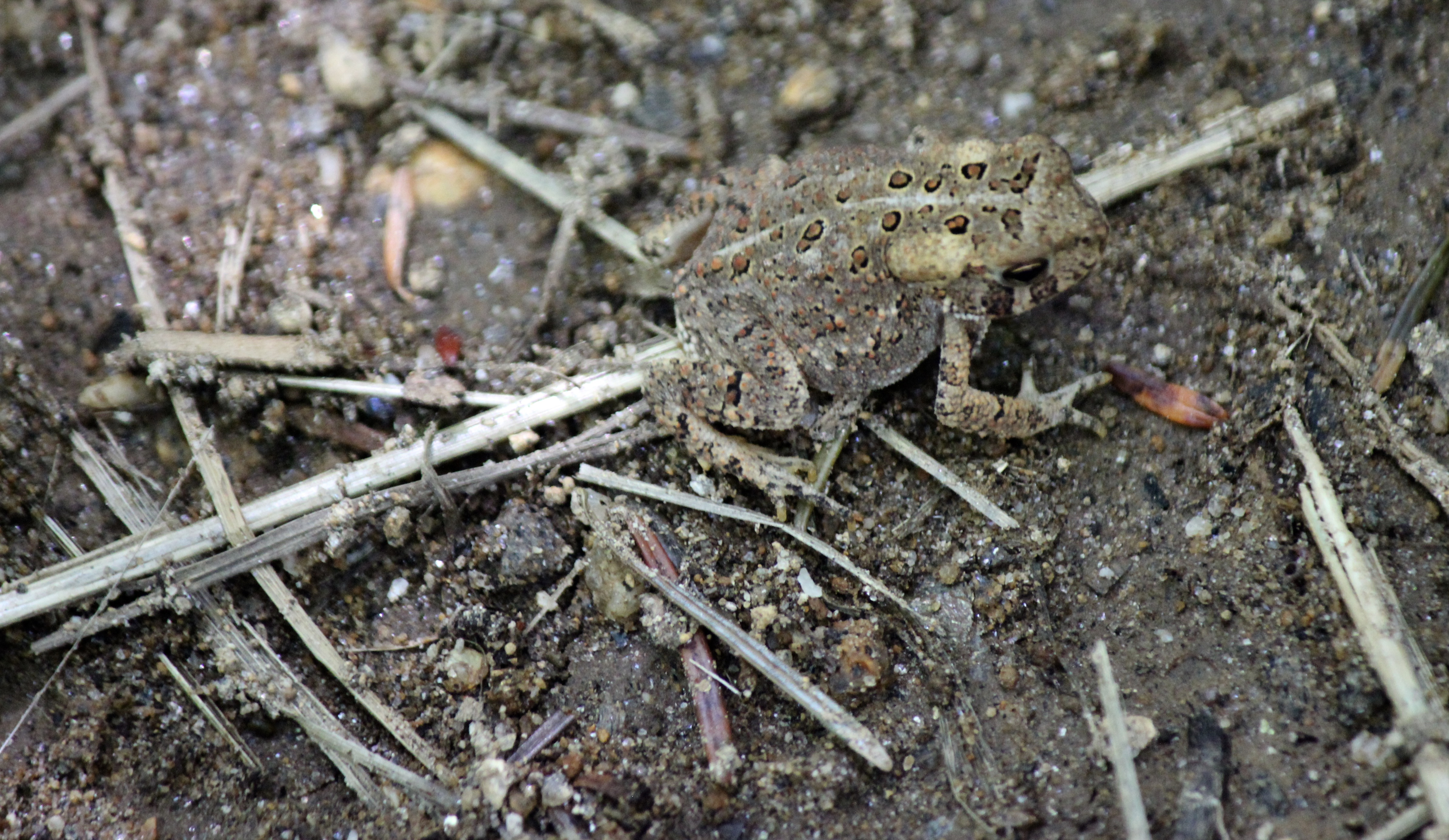 n-toad camo