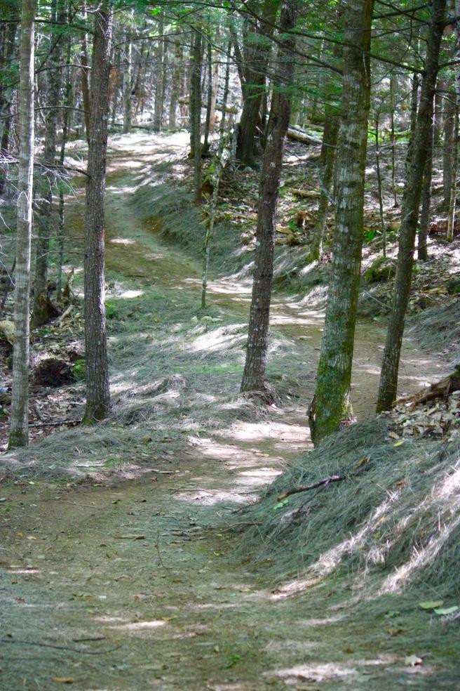 n-trail 1