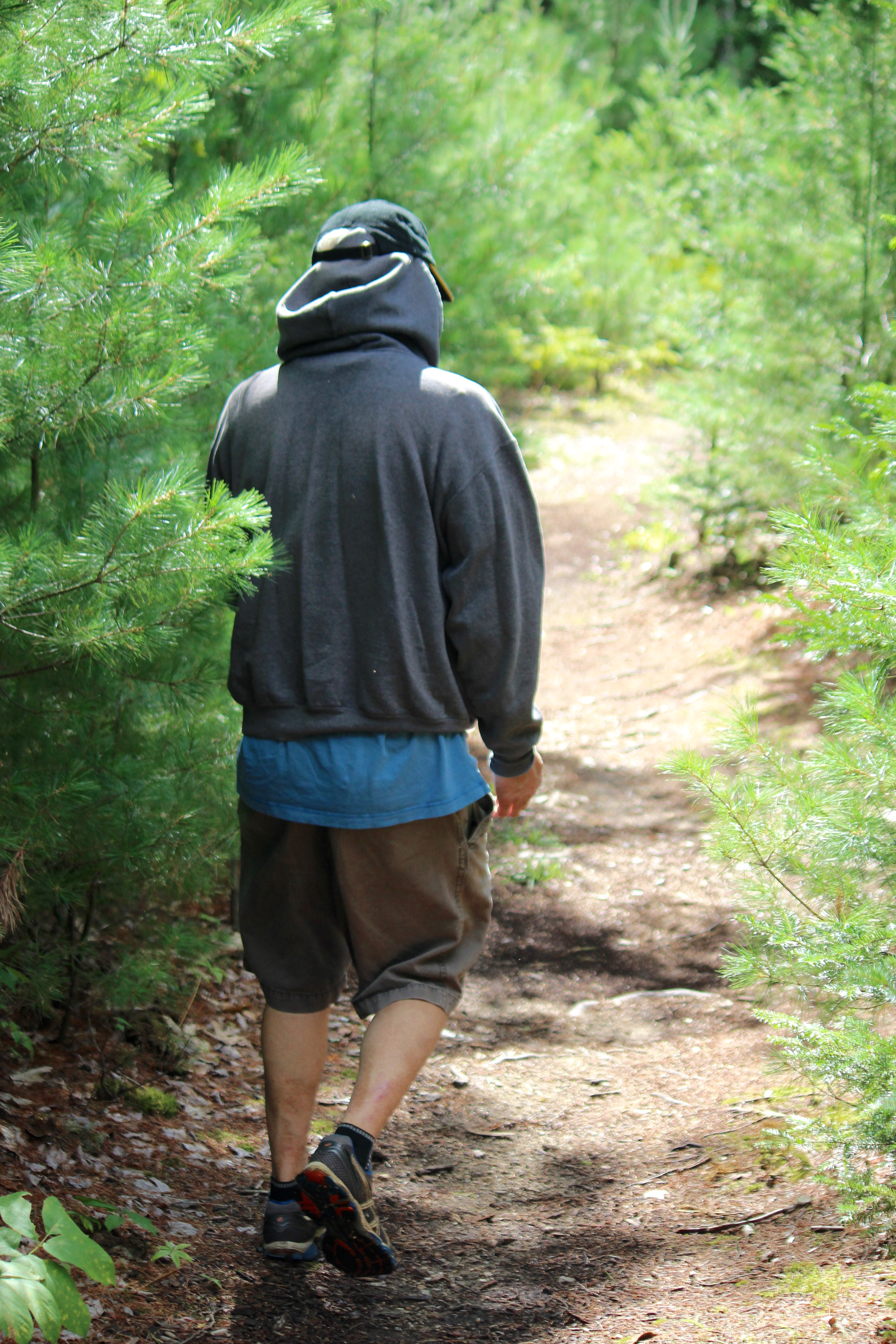 n Witt Swamp evergreens