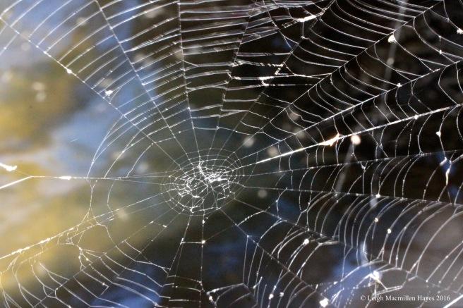t spider web