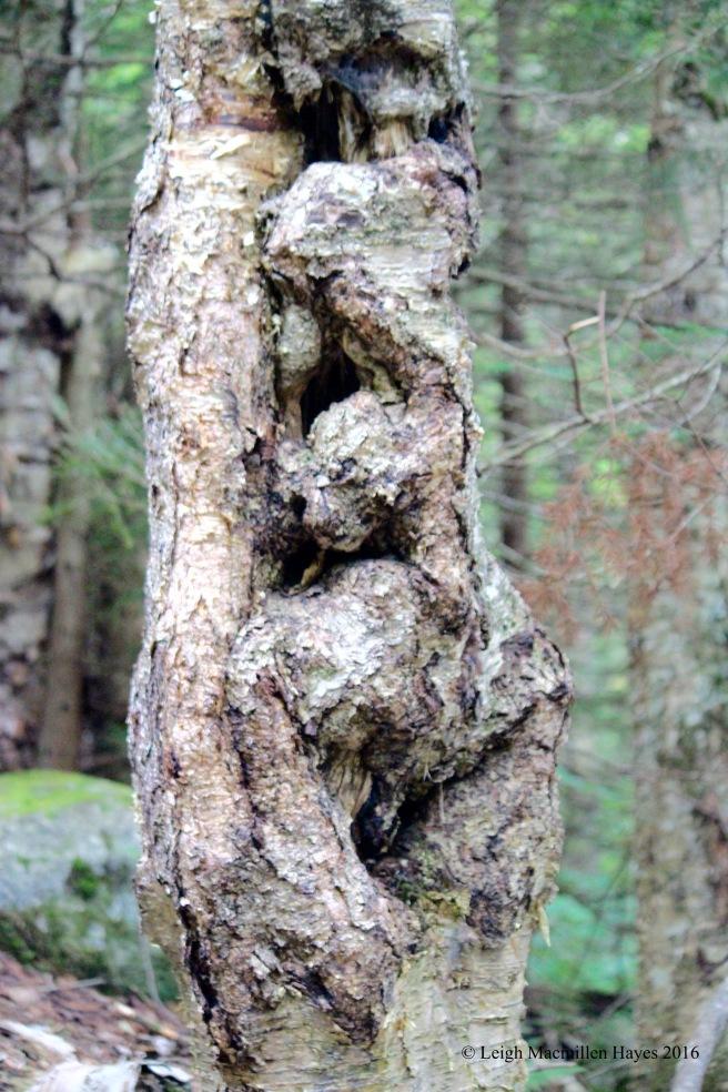 h-birch art yellow