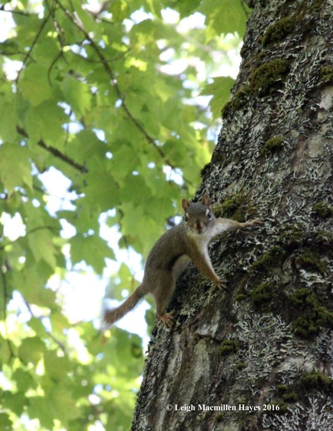 k-squirrel.jpg