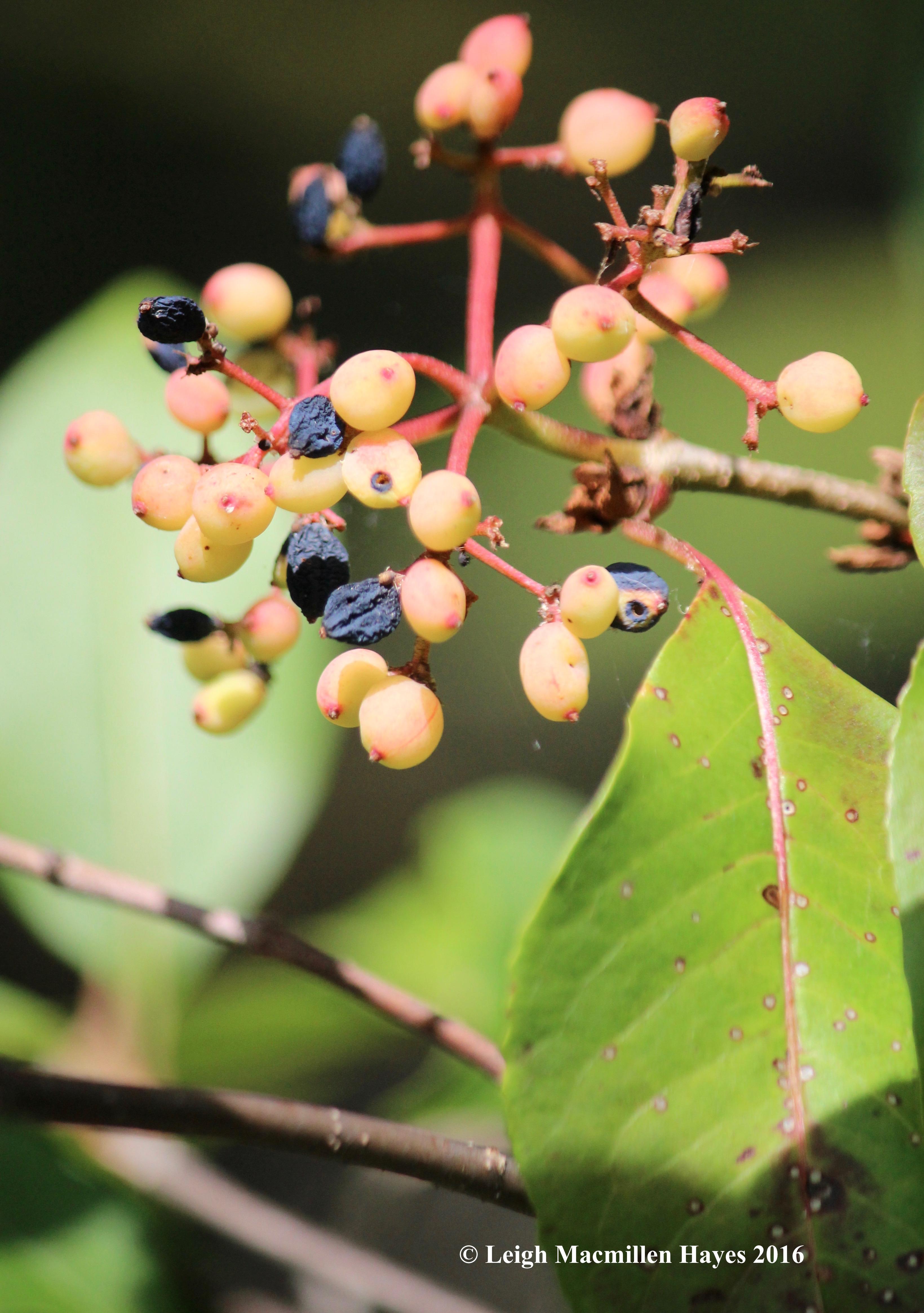 k-wild raisins 3