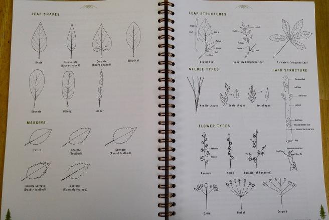 t-leaves (1)