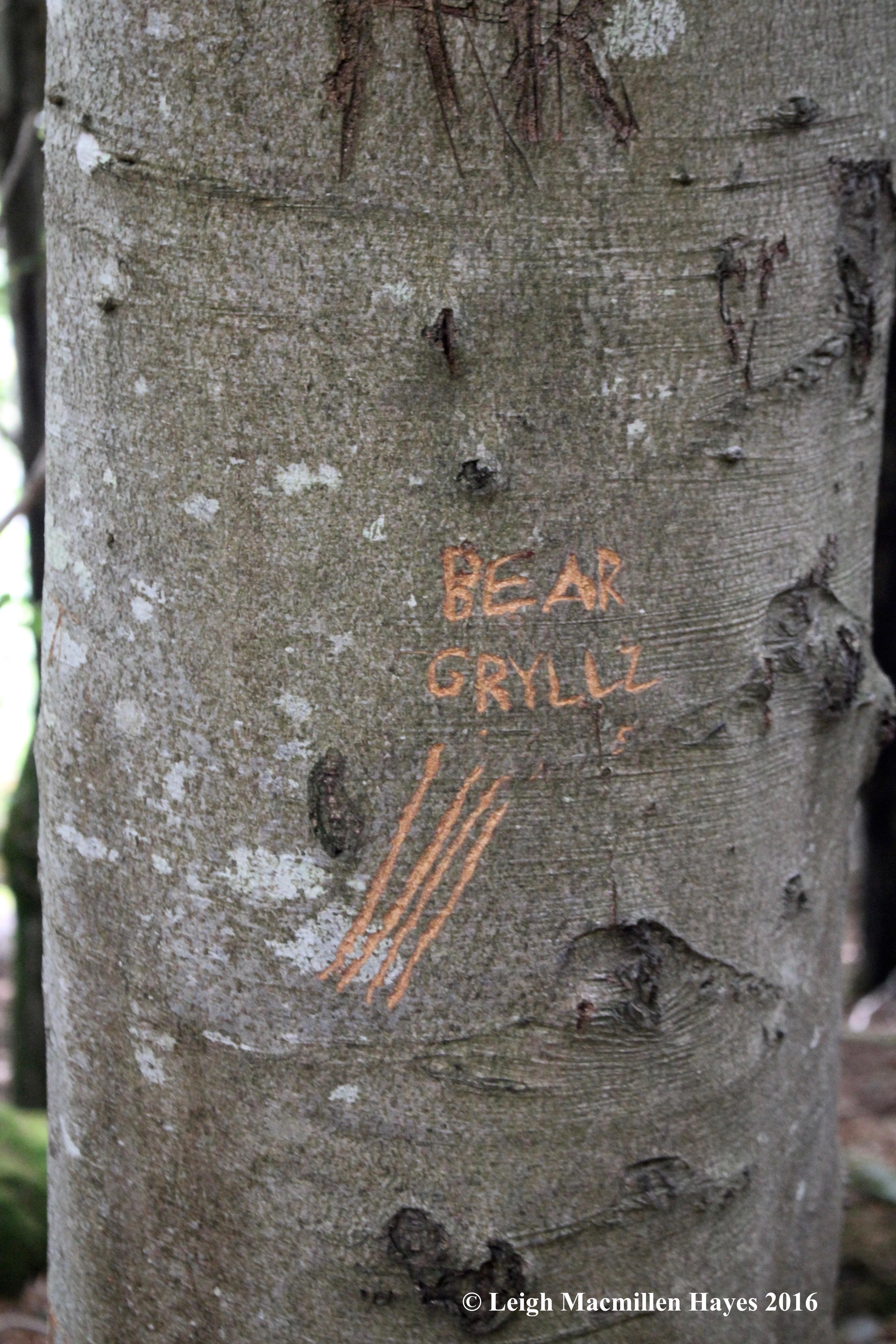 bear-gryllz-signature