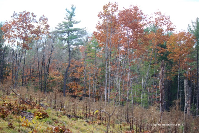 l-forest-succession-1