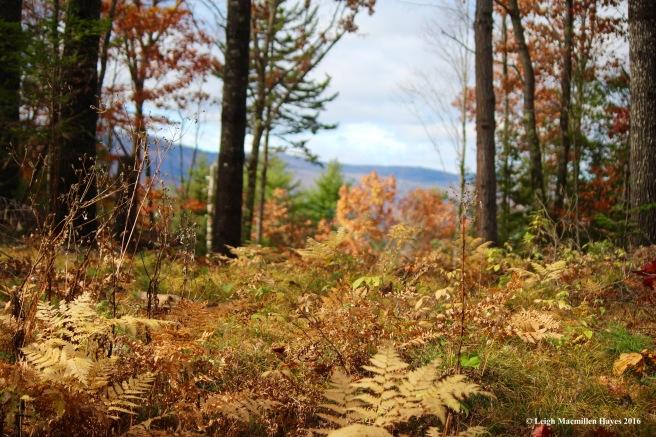 l-forest-succession-2