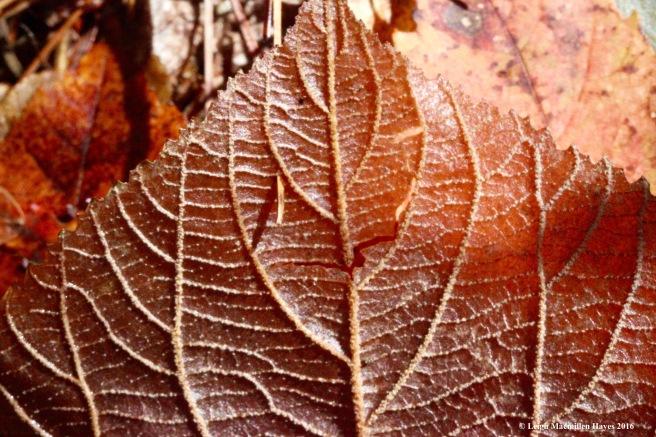l-hobble-leaves-2