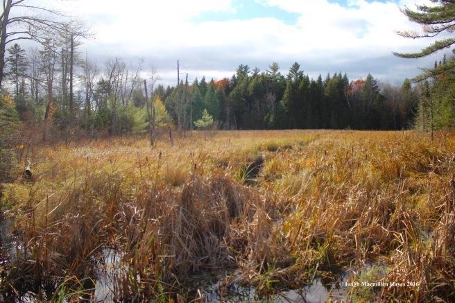 l-meadow-east