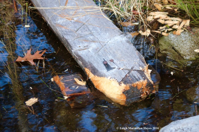 o-beaver-works