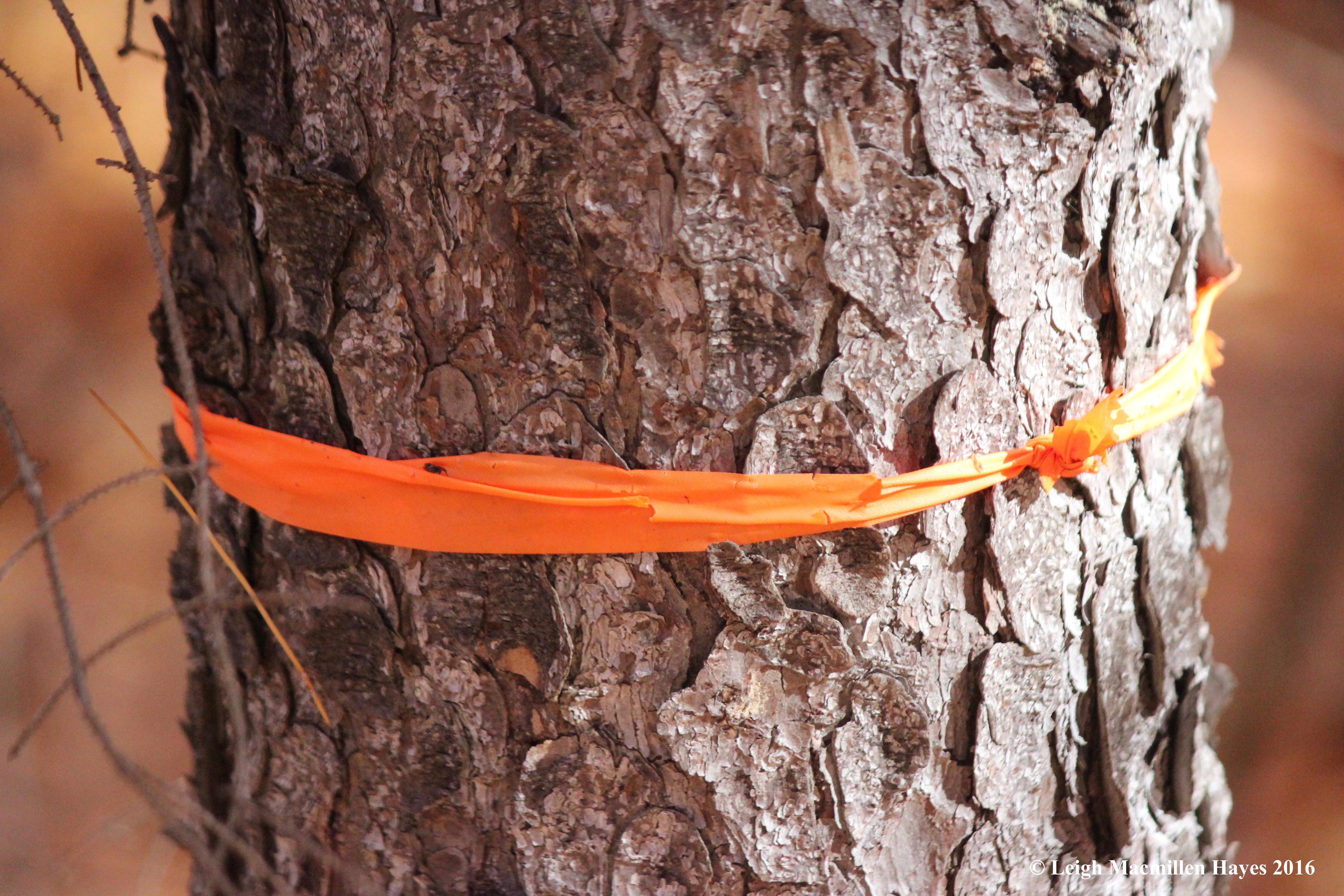 o-orange-ribbon