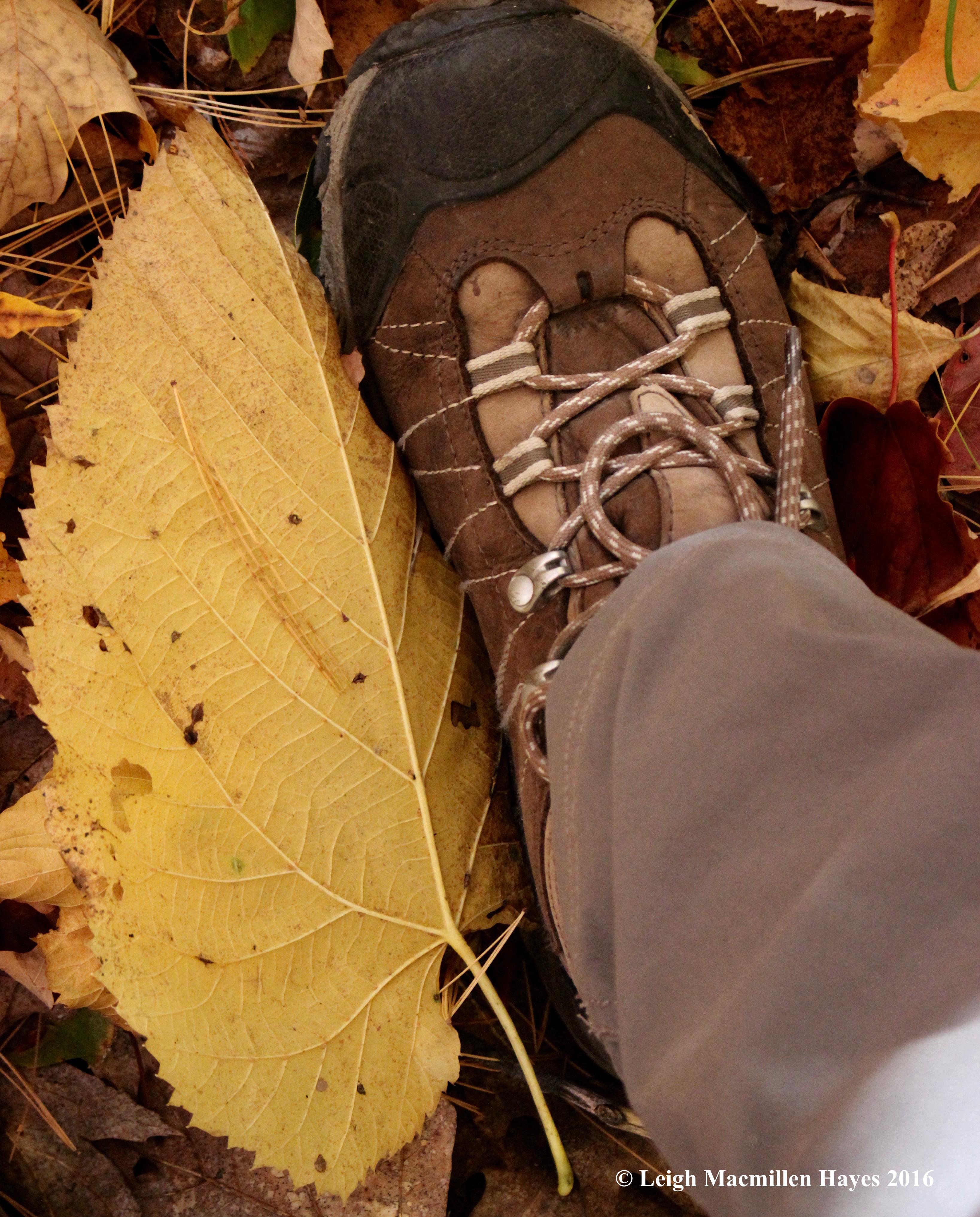 r-basswood-leaf