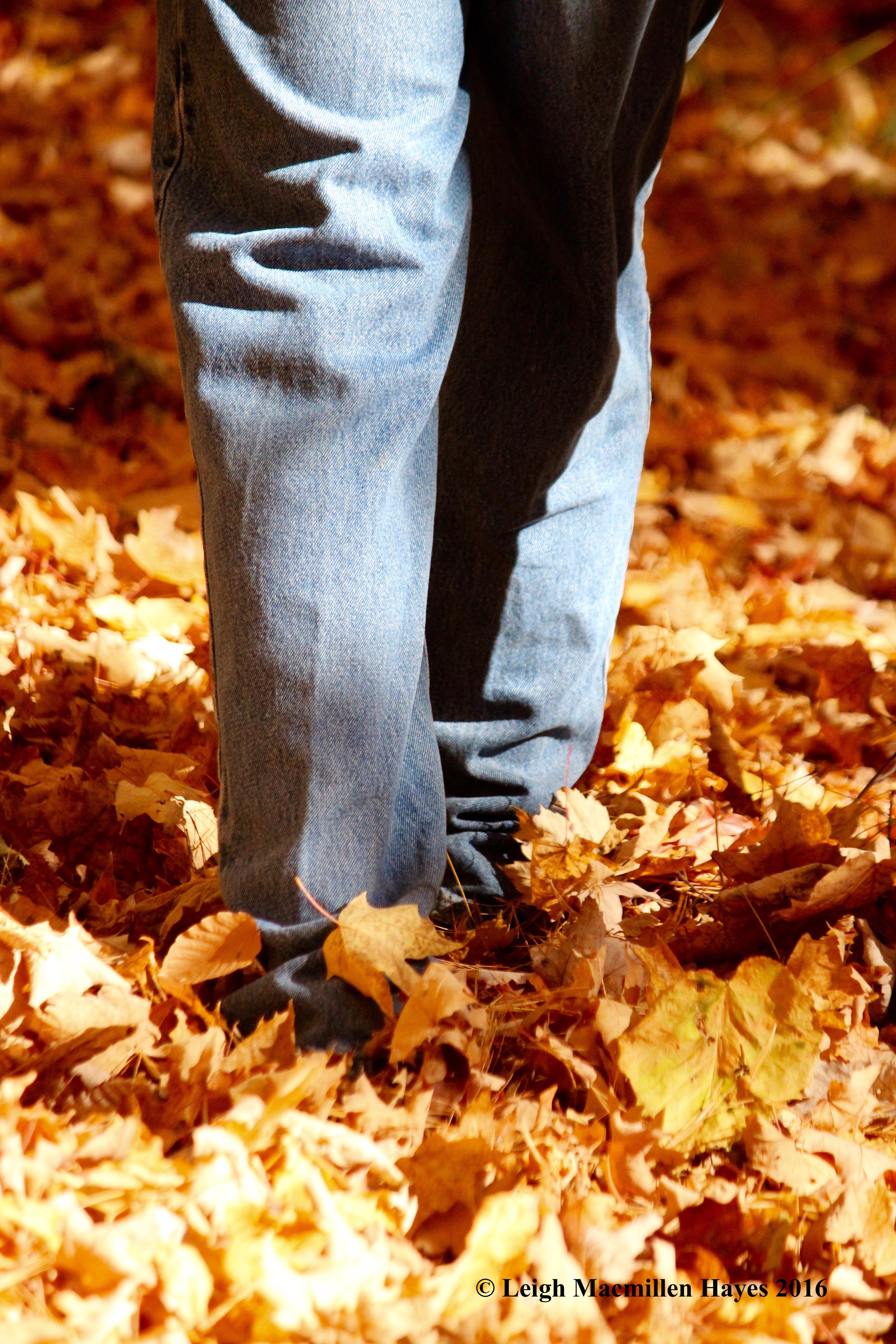 r-dry-leaf-sound