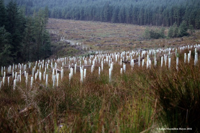 reforestation-wicklow-way