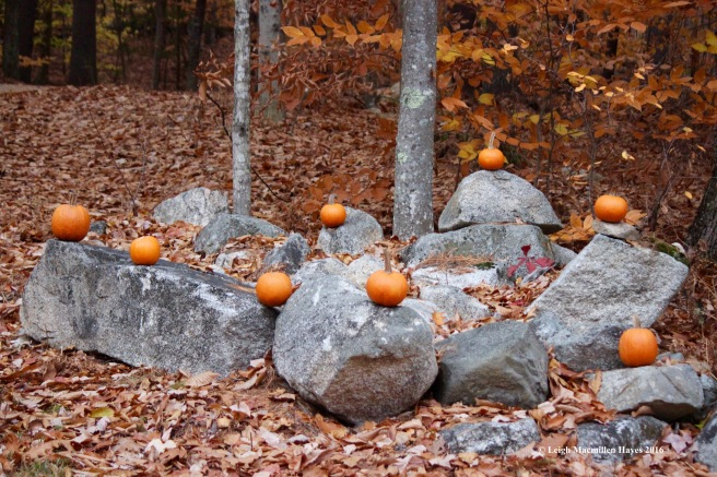 t-menotomy-pumpkins