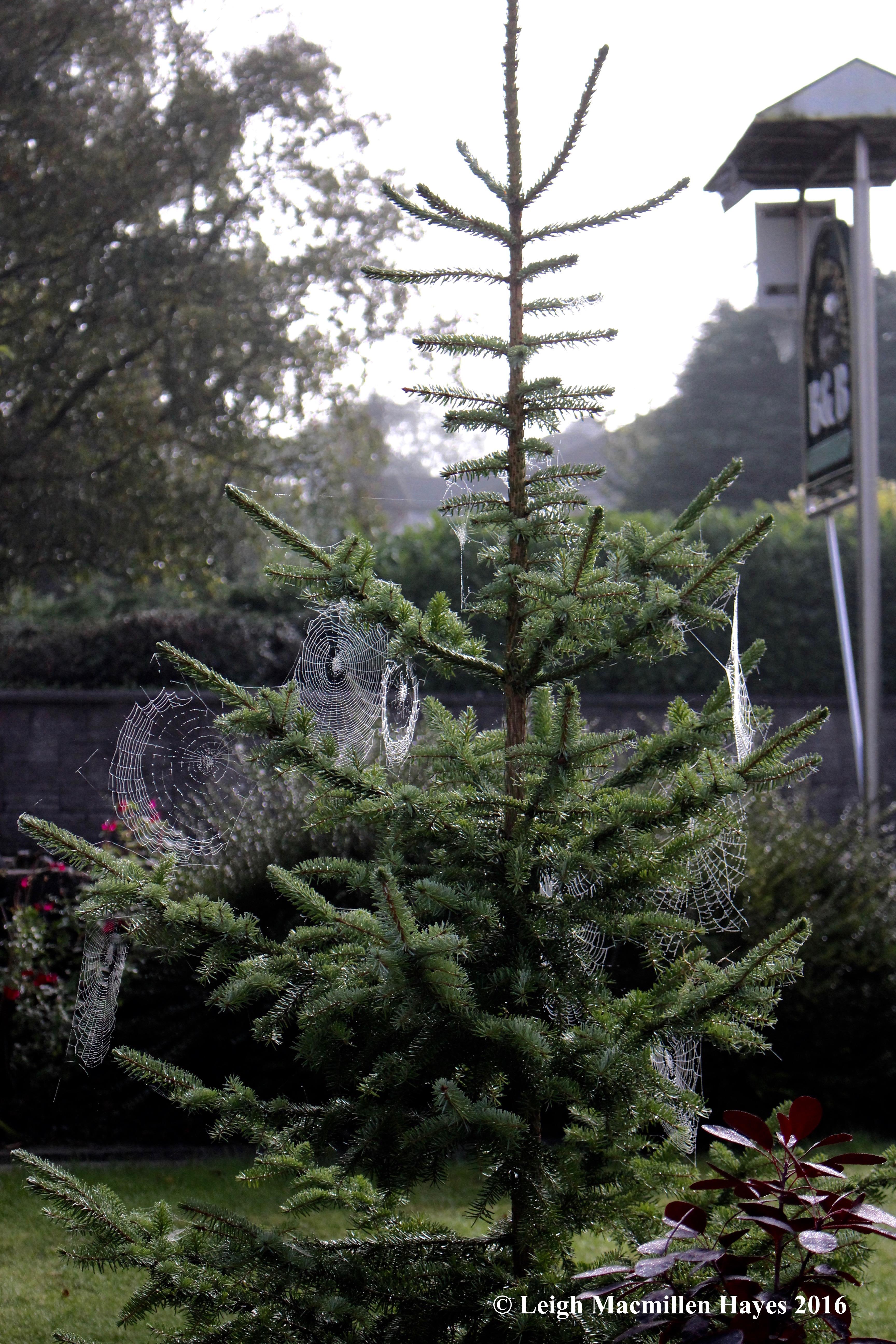 tree-webs