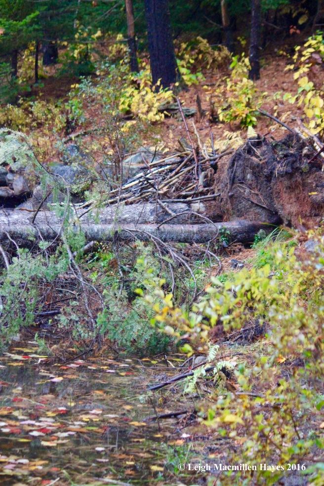 u-beaver-lodge