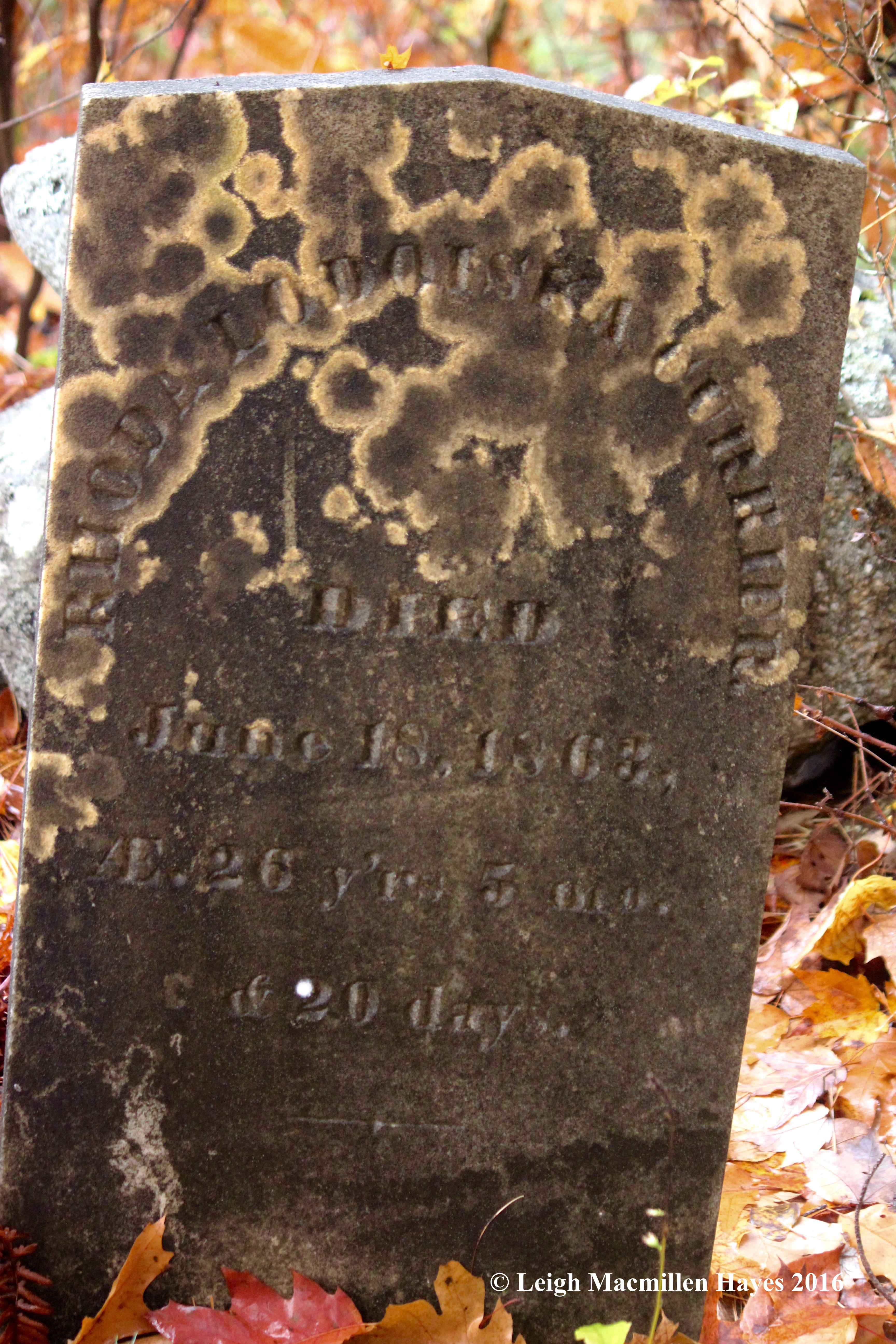 u-cemetery-lichens