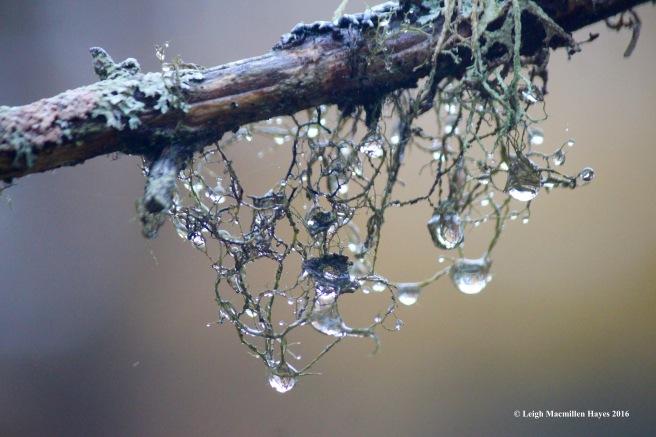 u-raindrop-lichens-2