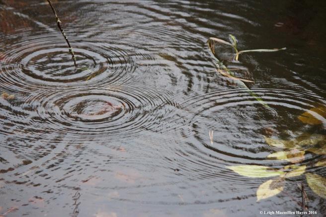 u-raindrops-on-pond