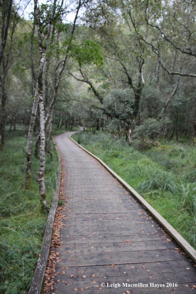 ww-boardwalk