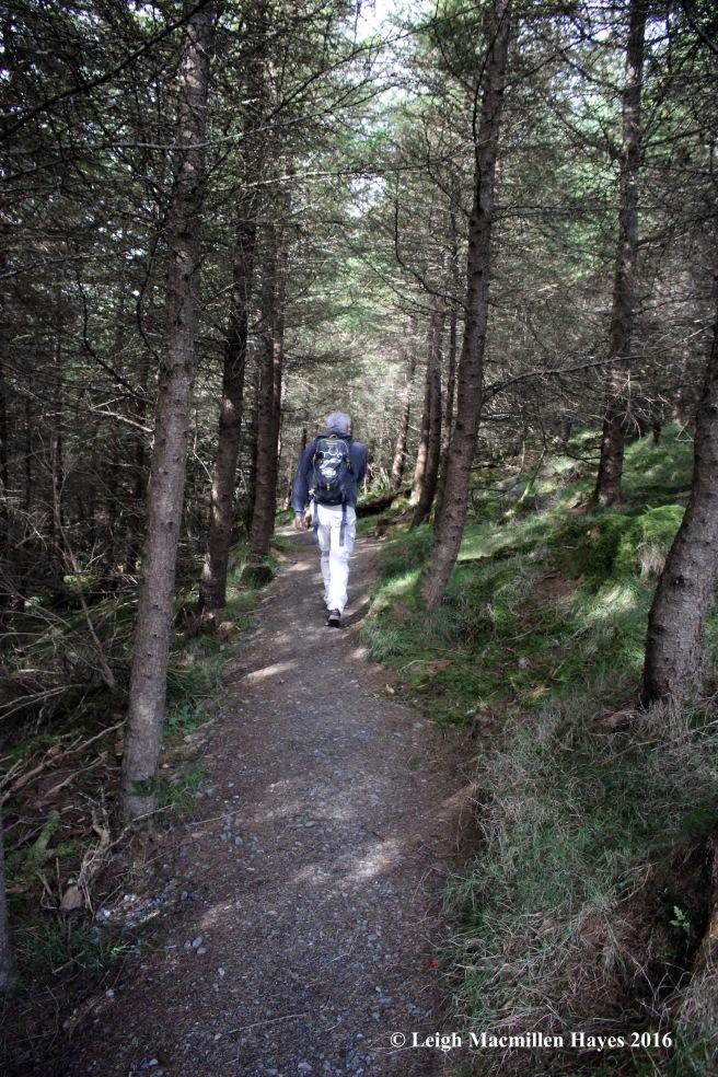 ww-forest-path
