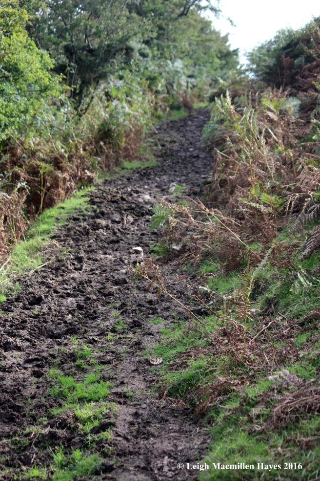 ww-muddy-trail