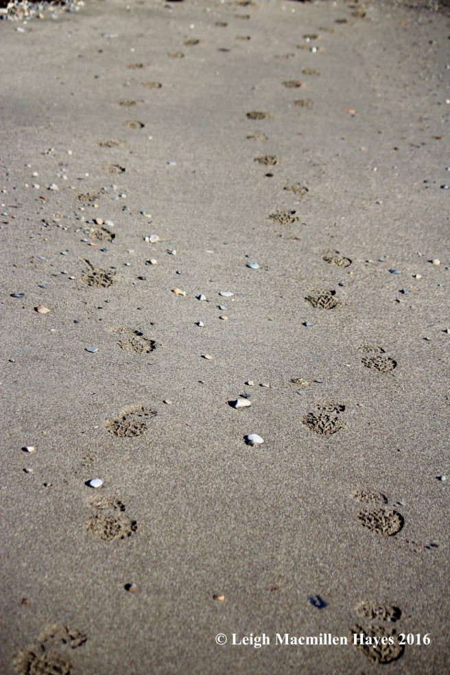 c-matching-footprints