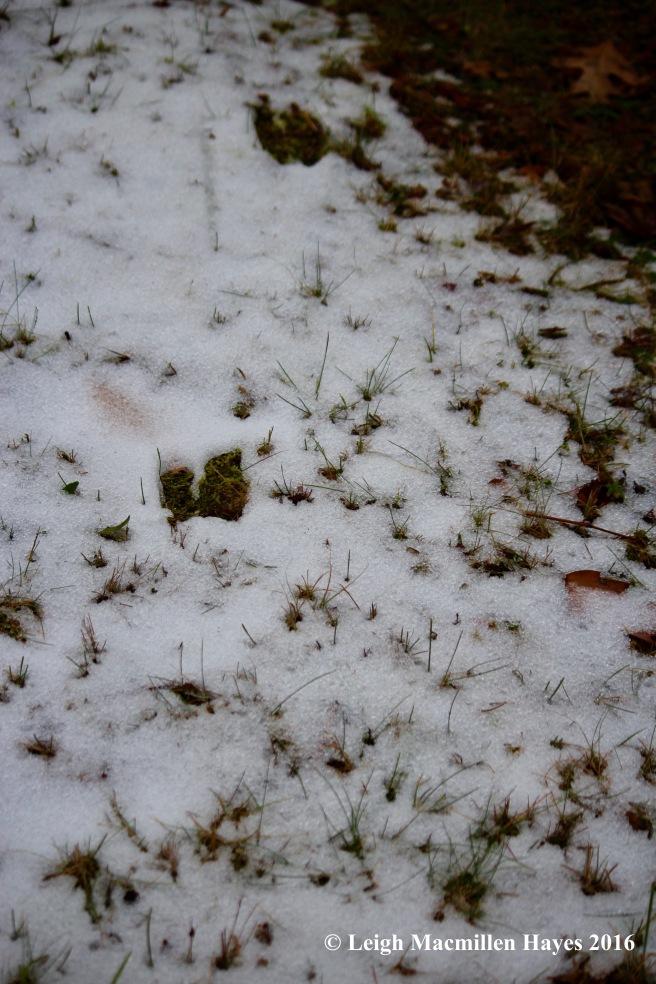 h-deer-tracks