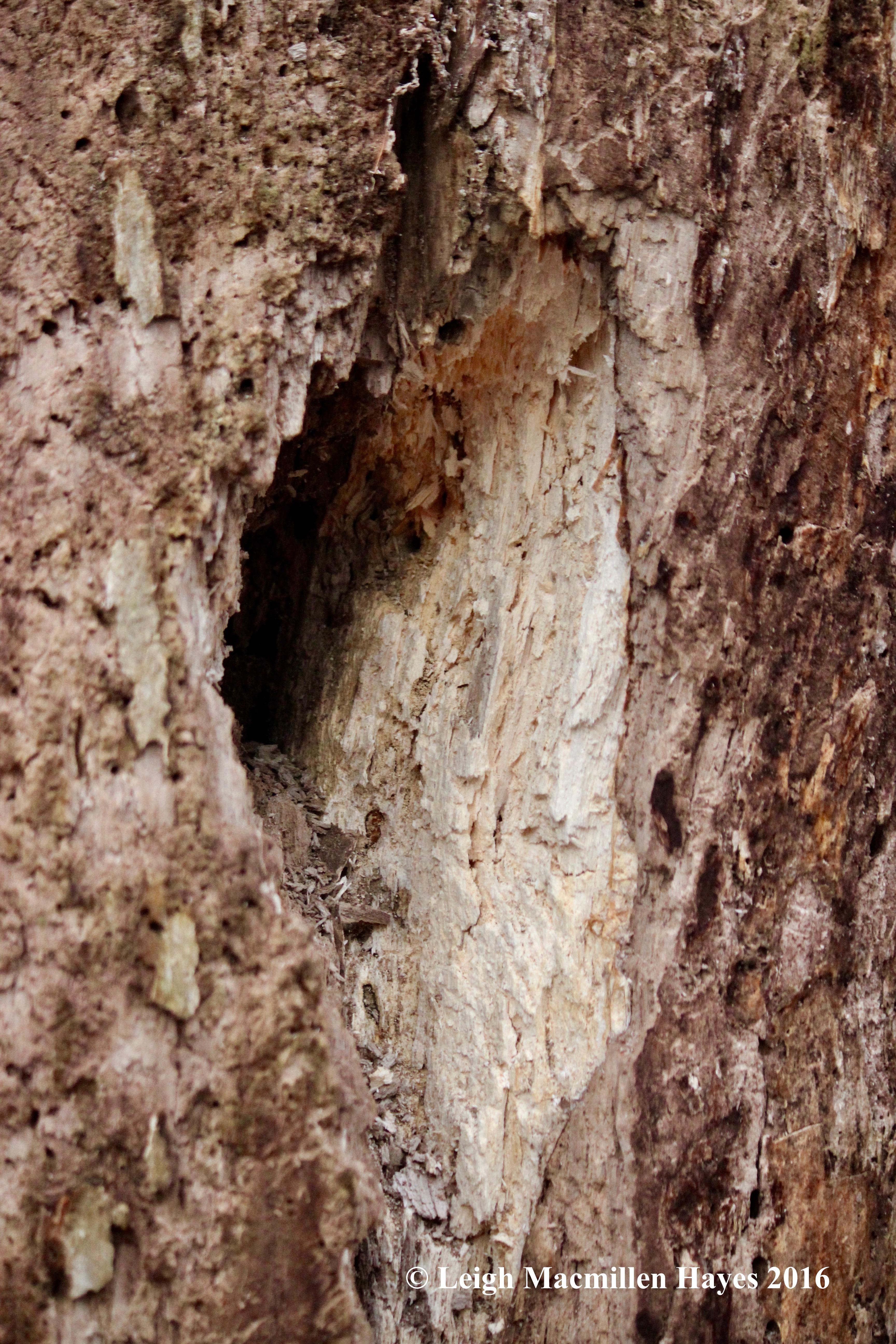 h-woodpecker-hole-1