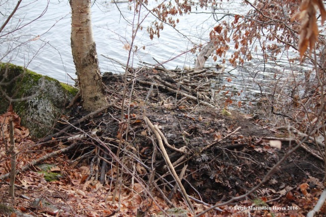 s-beaver-lodge