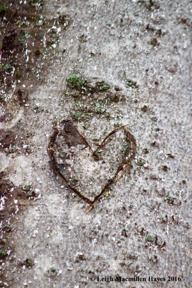 s-heart