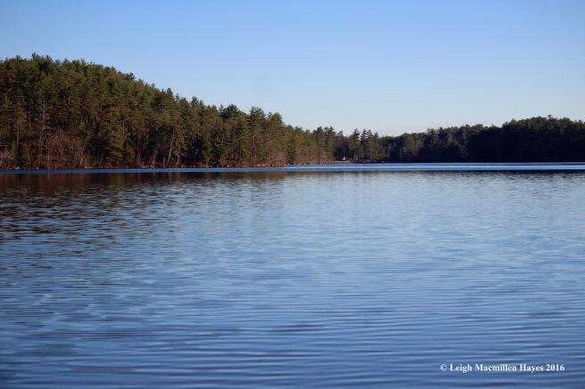 w-bear-pond